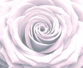 Rosen Impressionen