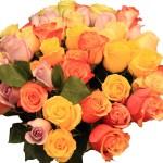 Rosen bunt gemsicht