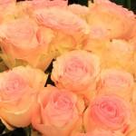 Rose Esperanza